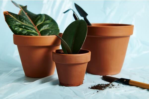 earthern pots